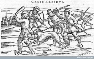 Rabies: Slaying a mad dog. From Dioscordes, Acera de la materia medicinal y de los venenos, 1556. Credit: Wellcome Library, London.